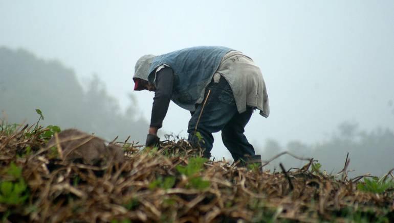 Fenomeno de El Niño Sequias en Tolima perdidas de cosechas: Campesinos ya están perdiendo sus cosechas por fenómeno de El Niño