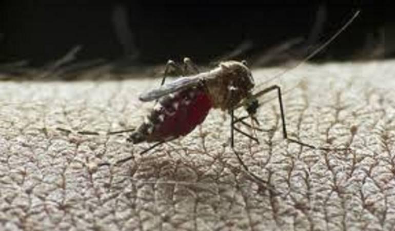 Autoridades de salud piden a los ciudadanos tomar medidas de precaución por el dengue