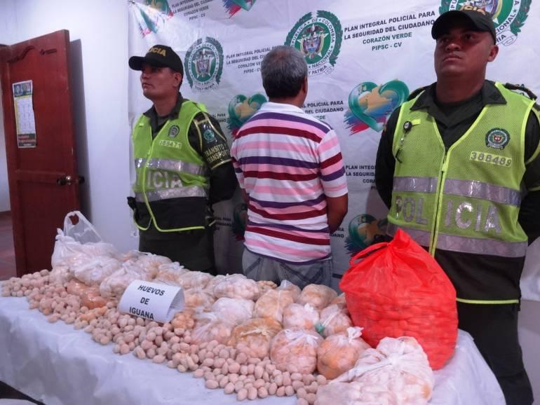 Doce mil huevos de iguana fueron decomisados por la policía en Bolívar