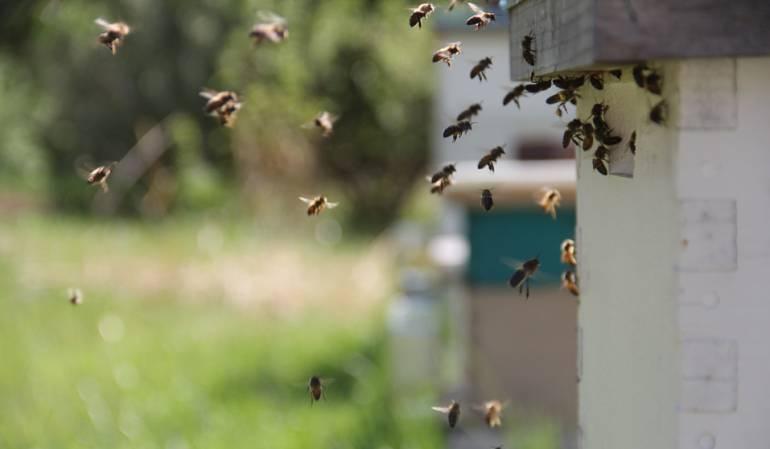 Un niño murió por picadura de abejas en Boyacá: Niño de dos años murió por picadura de abejas en Boyacá