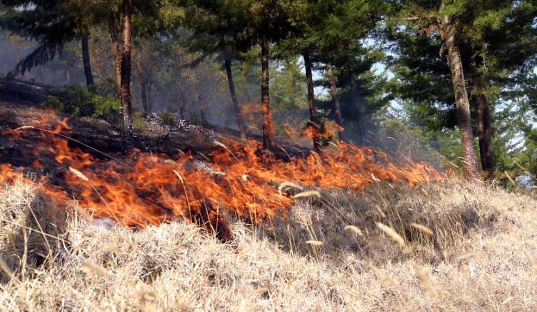 incendios forestales frontera con Venezuela: A la fuerza pública venezolana atribuyen incendios forestales en la frontera colombiana