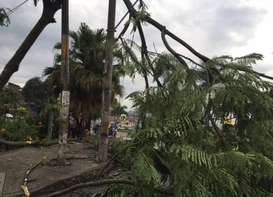 Vendaval en Pereira: Emergencia en Pereira y Dosquebradas por fuerte vendaval