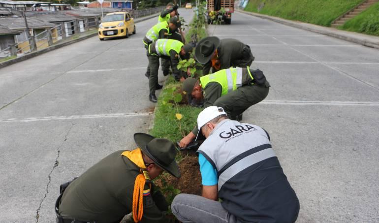 Siembran 200 árboles en Manizales