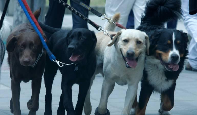 Adopción animales: Jornada de adopción canina en Bogotá
