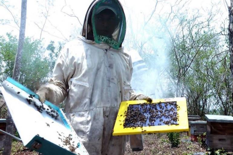 Denuncian exterminio indiscriminado de abejas cerca de reserva ... - Caracol Radio