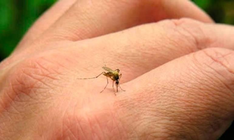 Dengue: Alarma en el Valle por alza de brote epidémico de Dengue