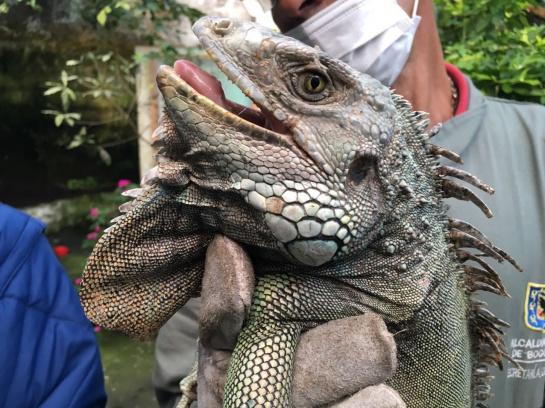 animales silvestres Bogotá: 122 animales silvestres incautados en Bogotá serán devueltos a su hábitat natural