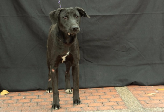 Rescate de animales en El Bronx Bogotá: Una docena de perros y 17 gatos fueron rescatados de la zona del Bronx
