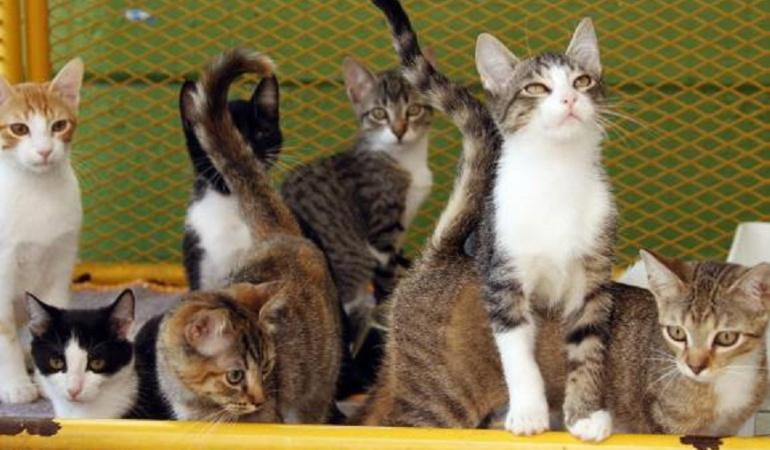 Denuncian matanza de gatos en Chiquinquirá, Boyacá: Denuncian matanza de gatos en Chiquinquirá, Boyacá
