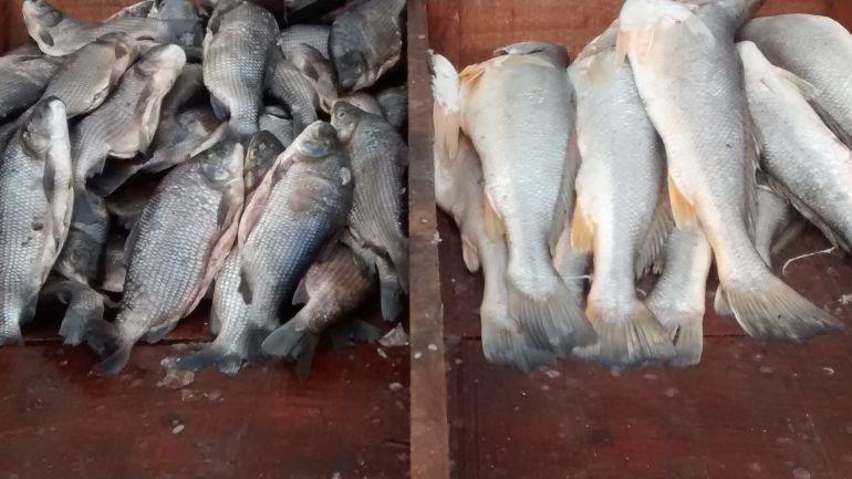 Abundancia de pescado en el mercado de Barranquilla.
