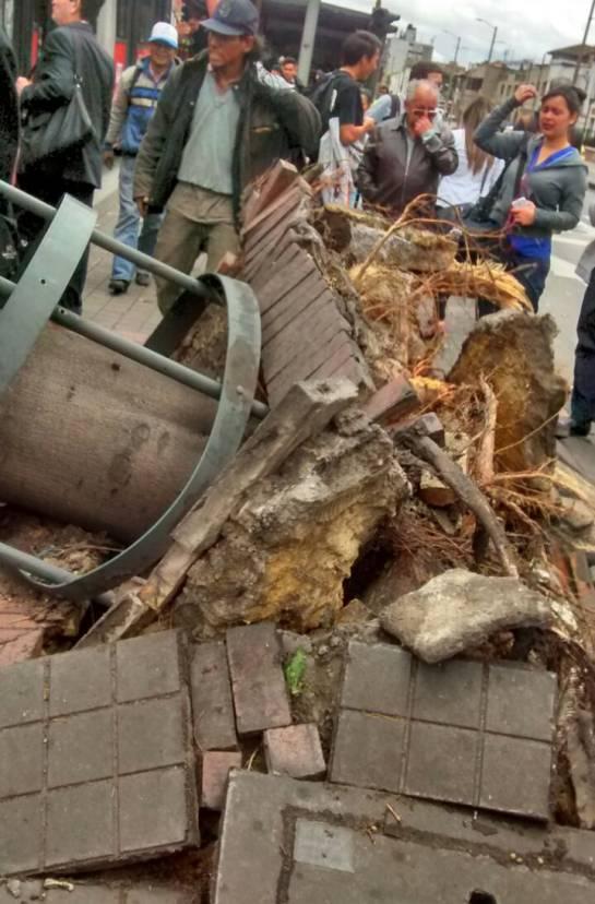 Caída de árbol Avenida Caracas Transmilenio: Seis puntos afectados en Bogotá por caída de árboles
