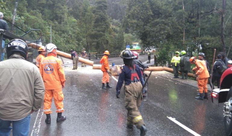 Arboles Bogotá: En lo corrido del año se han caído 288 árboles en Bogotá: Secretaría de Ambiente