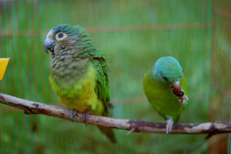 Especies de aves que eran maltratadas en Boyacá, serán reubicadas en Isla de Barú Cartagena: Especies de aves que eran maltratadas en Boyacá, serán reubicadas en Isla de Barú Cartagena