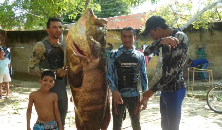 Capturan en Puerto Colombia gigantesco pez de 150 Kg