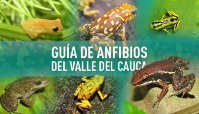 Caleños crean atlas virtual para conocer los anfibios del Valle del Cauca