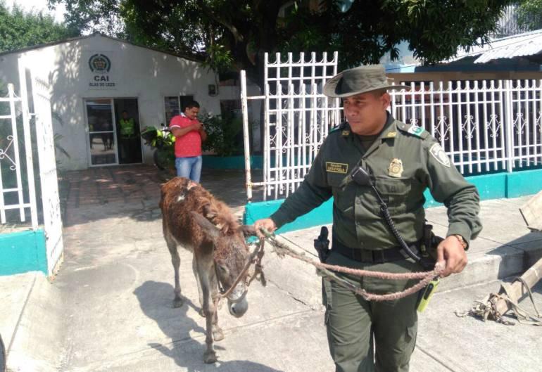 Más de 500 animales rescatados por maltrato o abandono este año en Cartagena: Más de 500 animales rescatados por maltrato o abandono este año en Cartagena