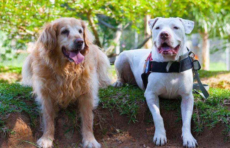 VENTA PERROS DISCRIMINADO: Defensores de animales piden controles a venta de perros en criaderos de Medellín