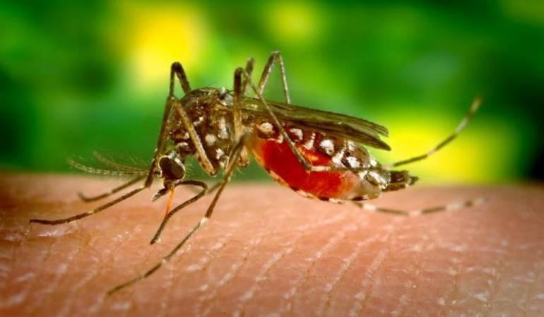 Alerta en Buenaventura por aumento de casos de Malaria: En Buenaventura, los casos de Malaria pasaron de 124 a tres mil casos