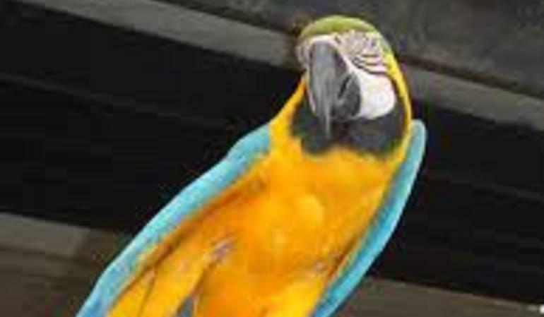 Feria de Aves: Cali alza vuelo en la Feria de Avistamiento de Aves