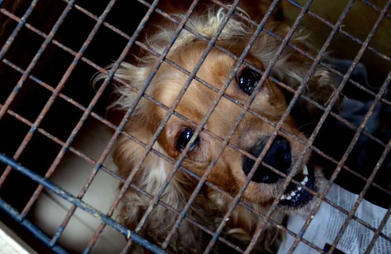 Más de mil perros disponibles para ser adoptados.