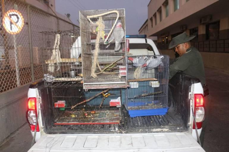 Policía recuperó un grupo de aves en vía de extinción en Cartagena: Policía recuperó un grupo de aves en vía de extinción en Cartagena