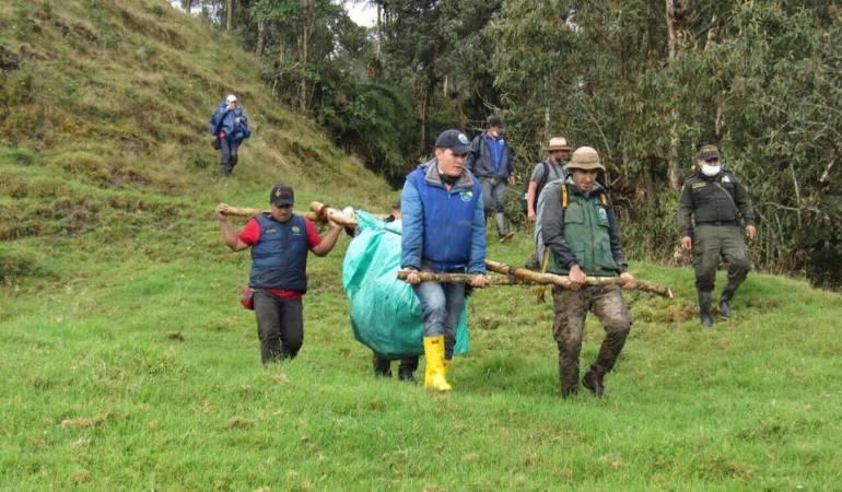 nueva muerte de oso andino: Denuncian nueva muerte de oso andino en páramo de Chingaza