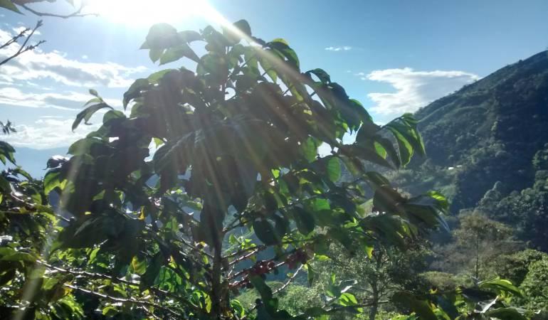 """Neira; Manizales; Aguadas; Anserma; medio ambiente; fauna; flora: Con """"Alma Verde"""" las caficultoras de Caldas cuidan el medio ambiente"""