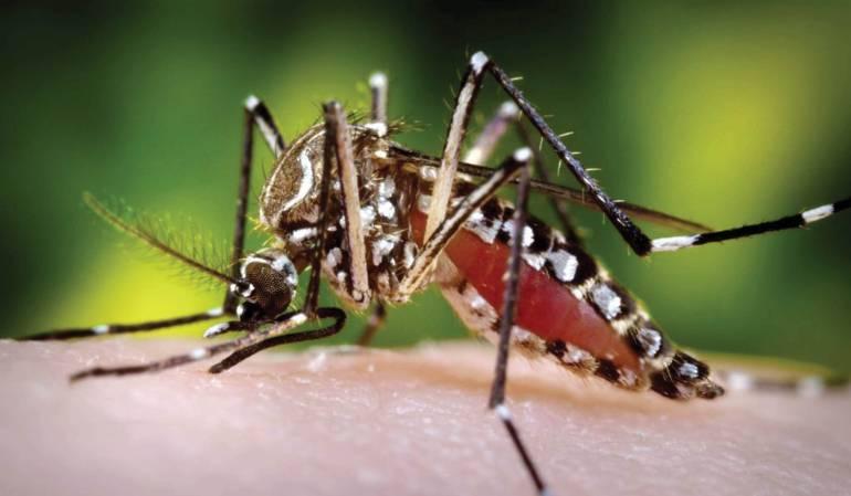Zika: La microcefalia crónica de una epidemia anunciada
