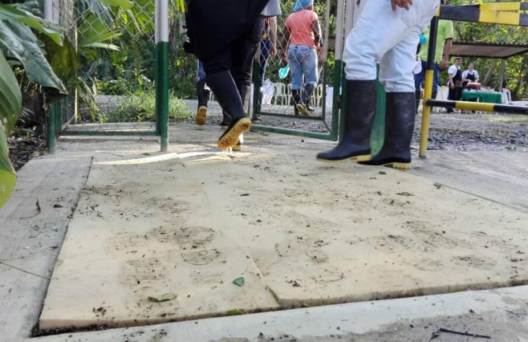 GREMIO BANANERO GRUPOS PARAMILITARES AUGURA: No hubo apoyo del gremio bananero a grupos paramilitares: afirma Augura