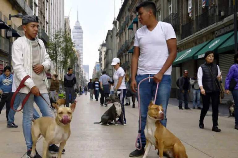 Alcaldía de Cartagena iniciará un registro de caninos potencialmente peligrosos: Alcaldía de Cartagena iniciará un registro de caninos potencialmente peligrosos