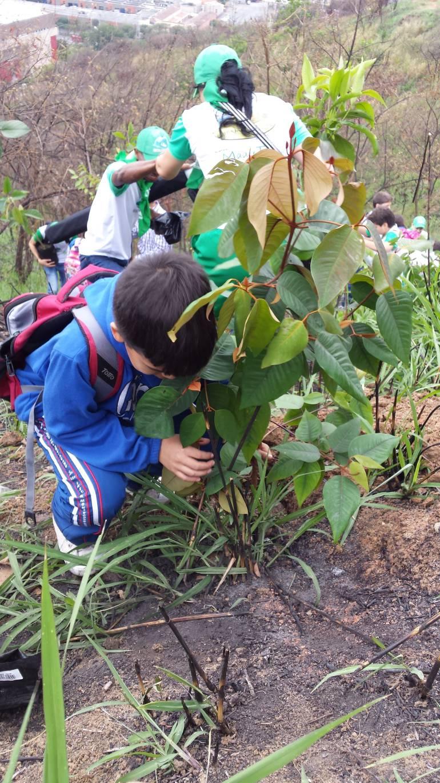 Medellín celebrará la Semana de la Tierra
