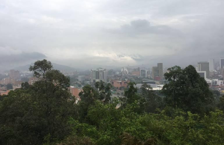 GANADERIA MEDELLIN ARBORATON: Central Ganadera de Medellín convoca Arboratón para sembrar 500 árboles