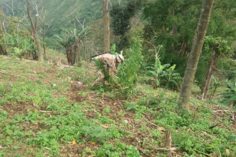 Más de ocho hectáreas de hoja de coca erradicadas en el Sur de Bolívar y la Guajira: Más de ocho hectáreas de hoja de coca erradicadas en el Sur de Bolívar y la Guajira
