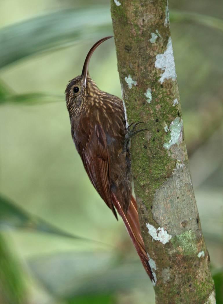 Aves en peligro fueron halladas en San Cristóbal