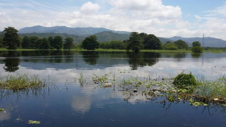 Lluvias afectan cultivos de caña de azúcar en el Valle: Lluvias obligan a suspender cosecha de caña en el Valle