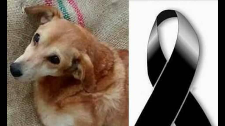 'Monita' era una mascota muy querida en Palestina (Caldas). Víctor Alfonso Ramírez la mató de varias puñaladas.