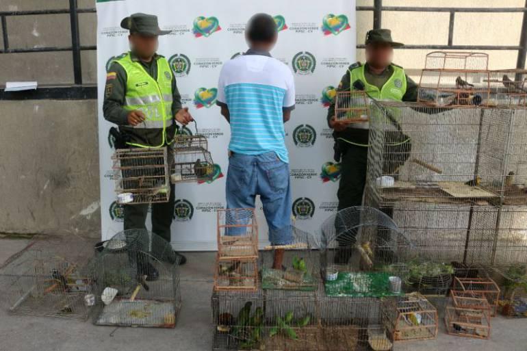 Autoridades recuperaron 56 aves silvestres que serían comercializadas en el mercado de Bazurto: Autoridades recuperaron 56 aves silvestres que serían comercializadas en el mercado de Bazurto
