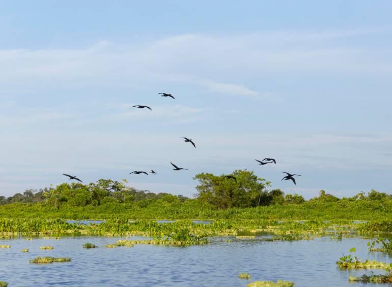 ciénaga, barbacoas, yondó, declaratoria, distrito, protegida: Declaran área protegida Ciénaga de Barbacoas en Yondó