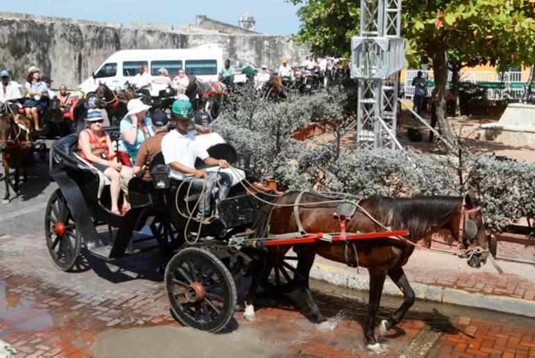 Animalistas de Cartagena celebran hundimiento de proyecto para reglamentar coches: Animalistas de Cartagena celebran hundimiento de proyecto para reglamentar coches