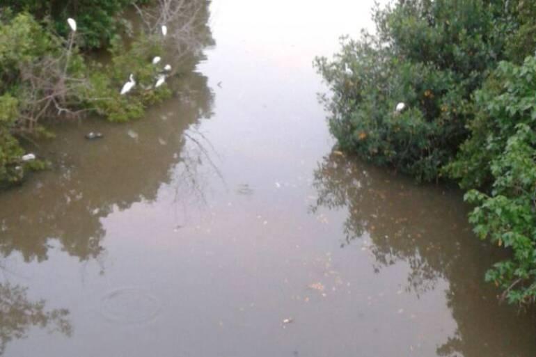 La contaminación del caño Juan Angola en Cartagena, sigue matando los peces: La contaminación del caño Juan Angola en Cartagena, sigue matando los peces
