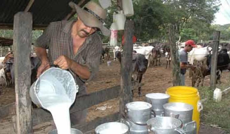 Productores de leche en Norte de Santander.