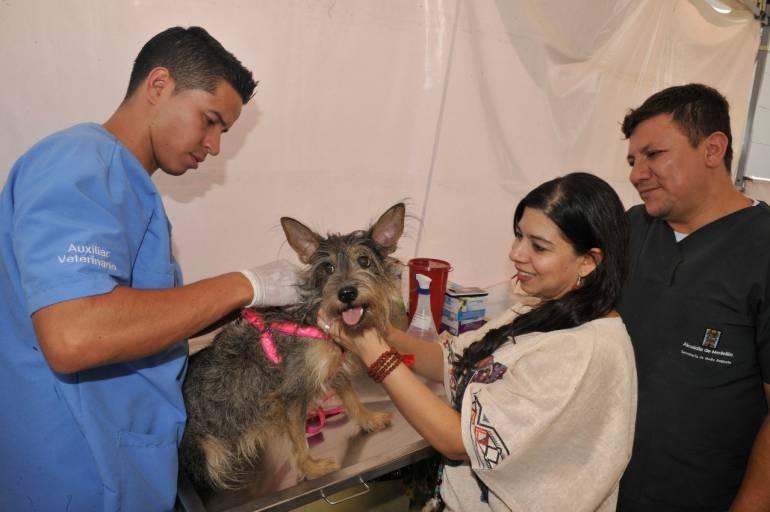 Jornada gratuita de vacunación para perros y gatos