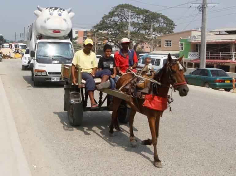 En tres meses, Alcaldía de Cartagena debe sustituir todos los vehículos de tracción animal: En tres meses, Alcaldía de Cartagena debe sustituir todos los vehículos de tracción animal