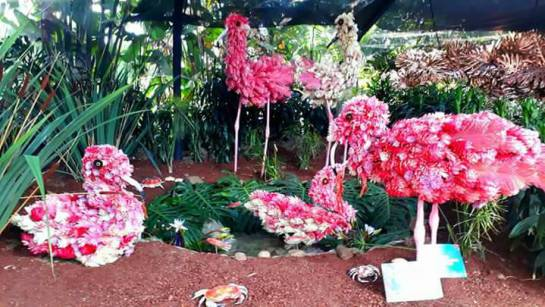Feria de las flores arranc orqu deas p jaros y flores for Bodas en el jardin botanico medellin