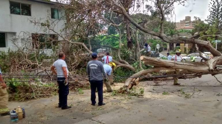 En el área metropolitana de Barranquilla se han presentado caída de árboles