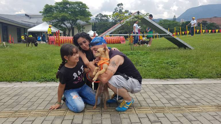 En Medellín hubo 82 solicitudes de adopción de animales en ocho días