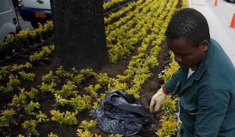 Jardín Botánico plantará 6.200 árboles en cerros orientales