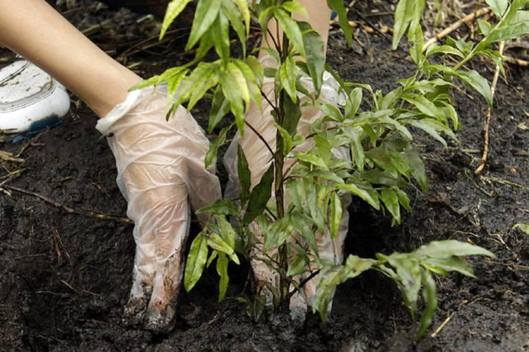 Medio Ambiente: ReverdeC realiza la siembra del árbol número un millón