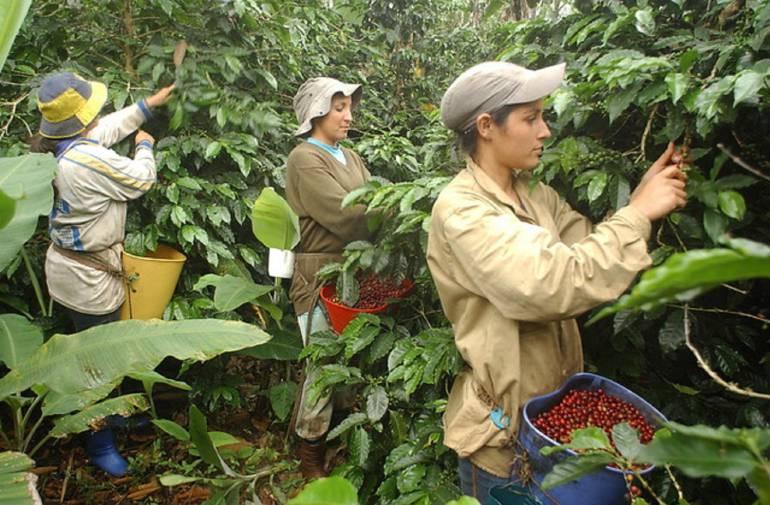 Restitución de tierras: Restitución de tierras ha agilizado economía en el Valle del Cauca