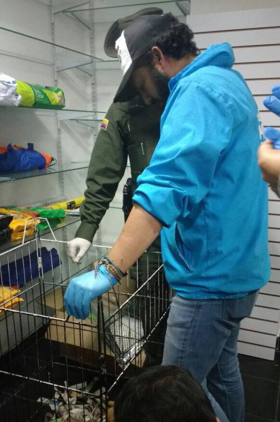 Maltrato animal en Bogotá: Sellan local en Bogotá por maltrato animal